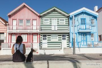 viajar a portugal con perro costa nova