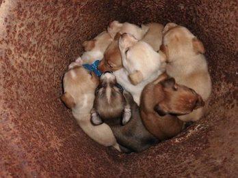 Tonys puppies 2