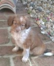 Rocco 2