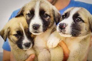 Dogos und seine Brüder