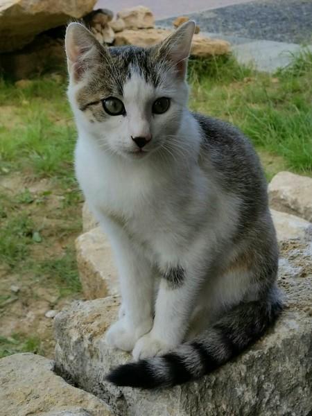Katze Mika aus Flieden vermisst
