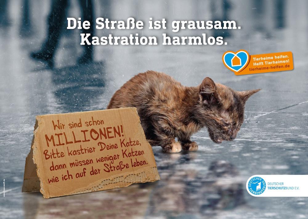Katzenelend – Das versteckte Leid der Straßenkatzen