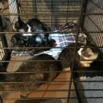 Katzenfamilie Rommerz ausgesetzt