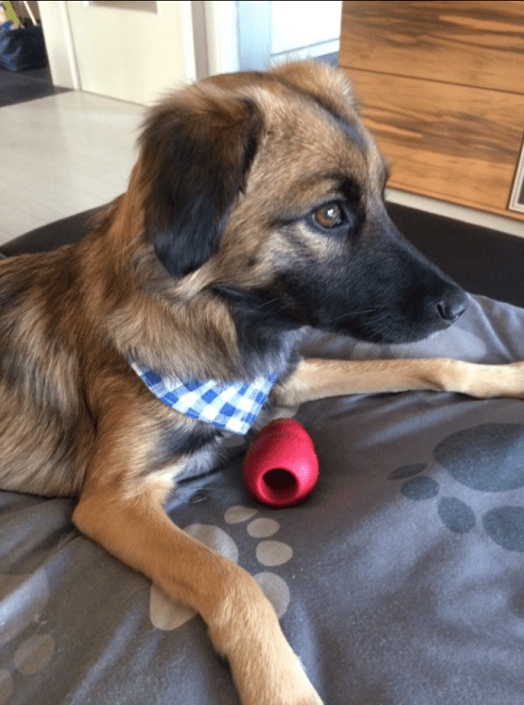 Mischlingshundedame entlaufen