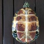 Schmuckschildkröte aus Rommerz