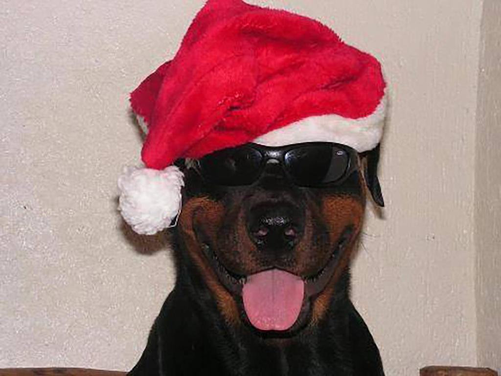 Der Tierschutzverein Fliedetal e.V. wünscht ein frohes Weihnachtsfest