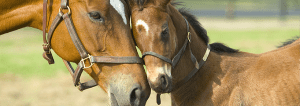 Broward Equestrian Homes for Sale