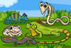 Despre reptile si amfibieni