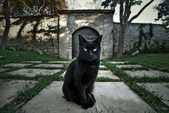 pisica_neagra_superstitii