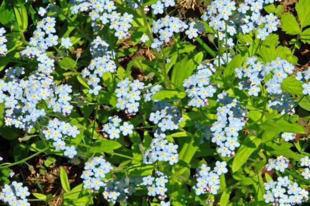 lemmikit-kukkivat-kesan-alussa