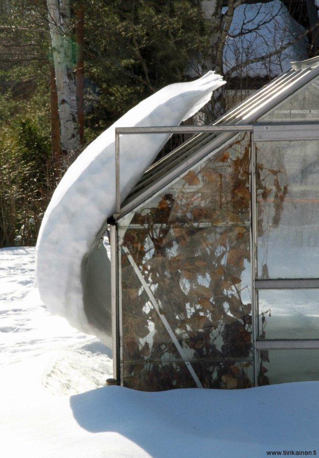 28.3.13 klo 10:22 - yopakkasten kovettama lumi kasvihuoneen katolla