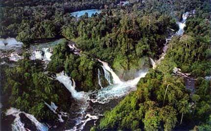 Amazone junglerivier