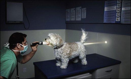 Hond met lantaarnstraal
