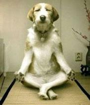 Meditatie hond copy