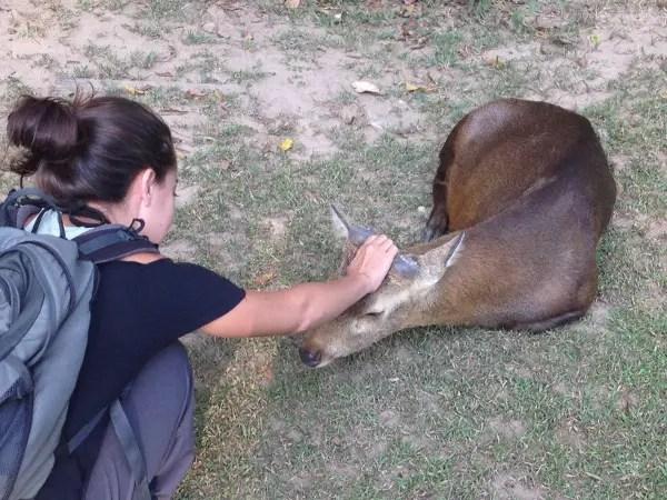 wildlife in chiang mai