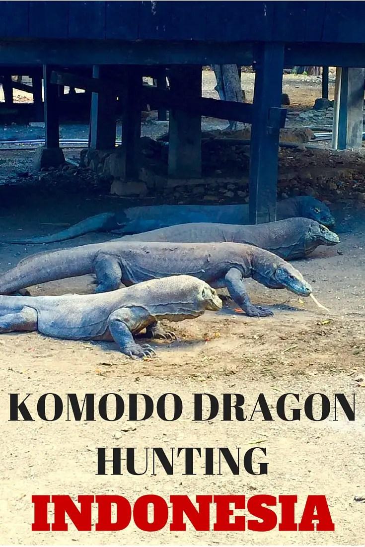 komodo dragon hunting