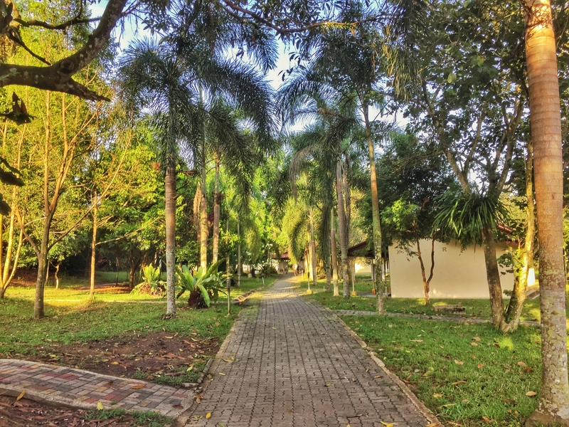 dhamma_malaya_grounds