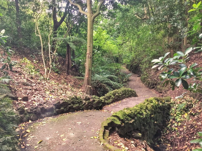 auckland domain trail