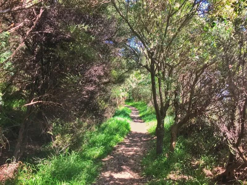 paekakariki escarpment trails