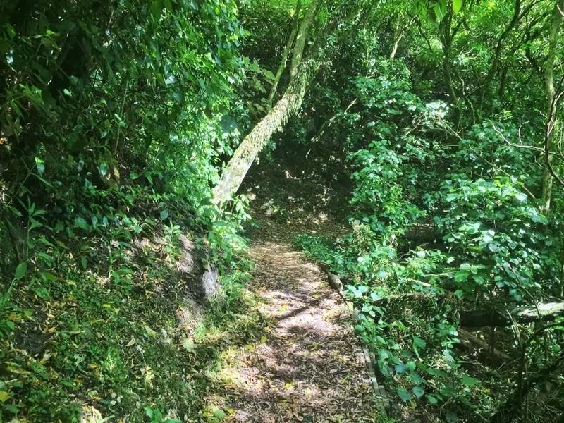 manawatu gorge path