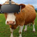 Teknologi VR Pada Sapi