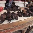 Saat ke Manado, Jokowi Ternyata Pernah Pesan Menu Spesial Daging Kelelawar