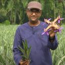 Peneliti Malaysia Bikin Drone dari Limbah Nanas