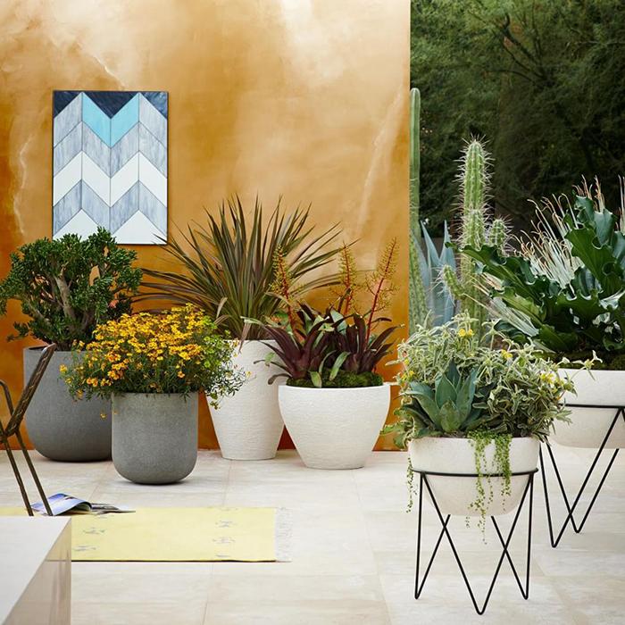 West Elm Outdoor Pot Plants