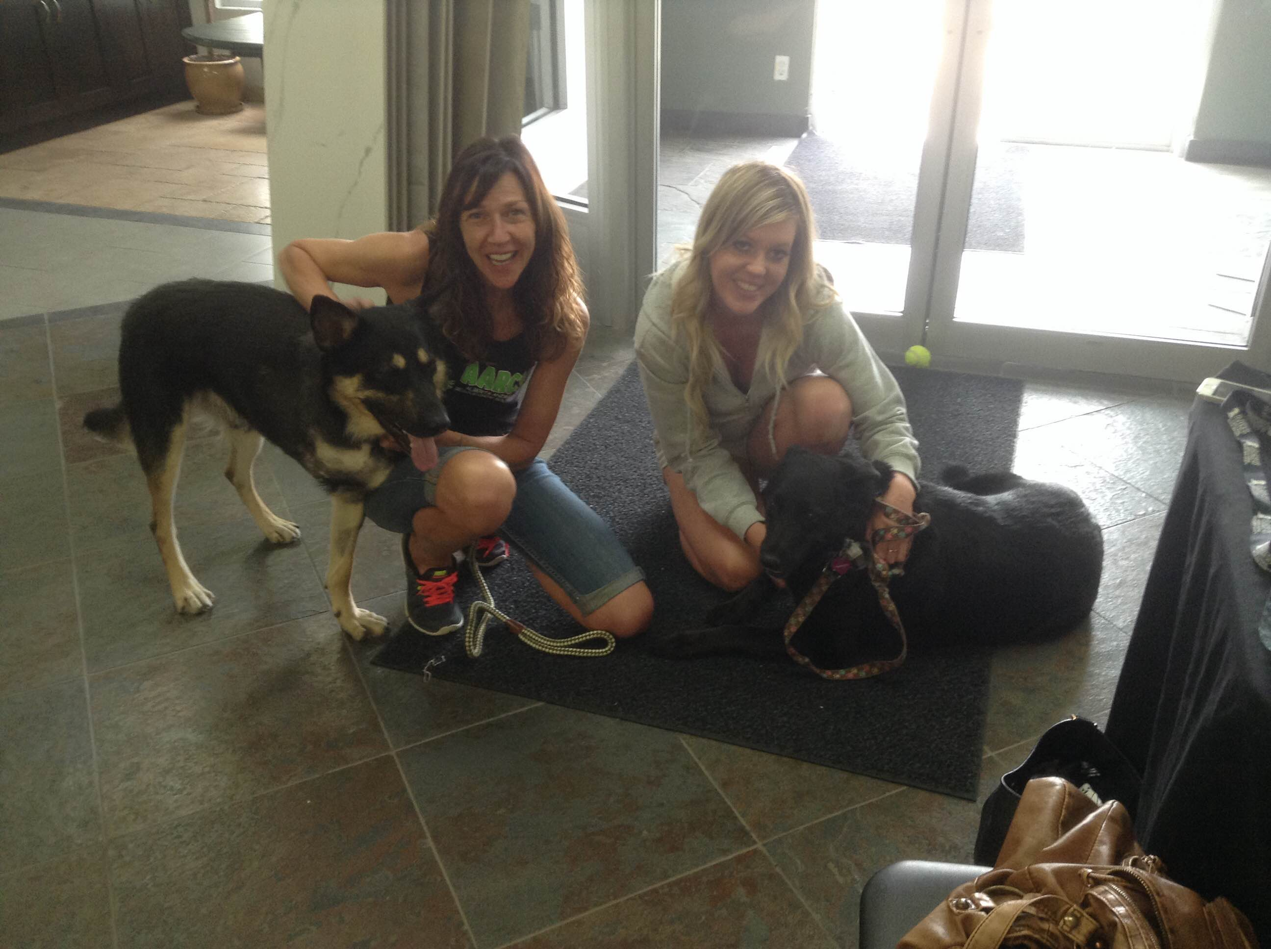 Haly & Max, adoptable AARCs dogs - Tile and Stone Source