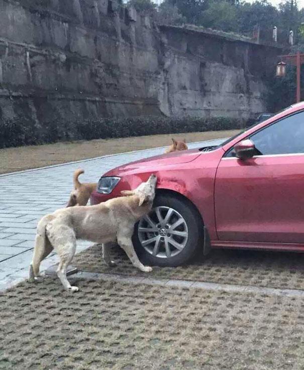 stray-dog-revenge-2