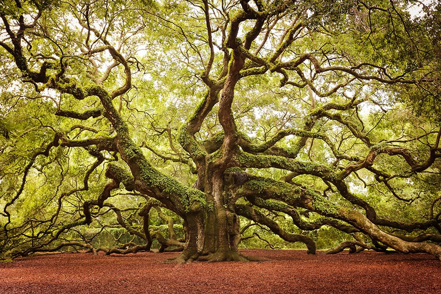 7531010-R3L8T8D-880-amazing-trees-22
