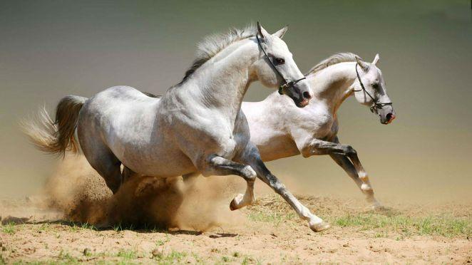 horses-desktop-wallpaper