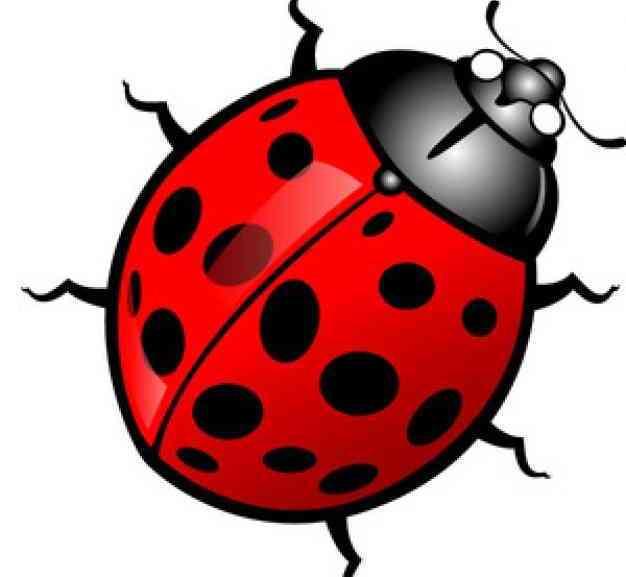Insectes et petites bêtes