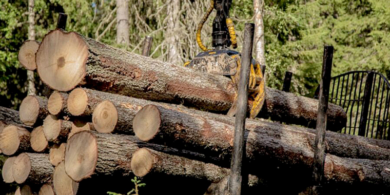 RUSSIA'S LOG EXPORT BAN A CHALLENGE