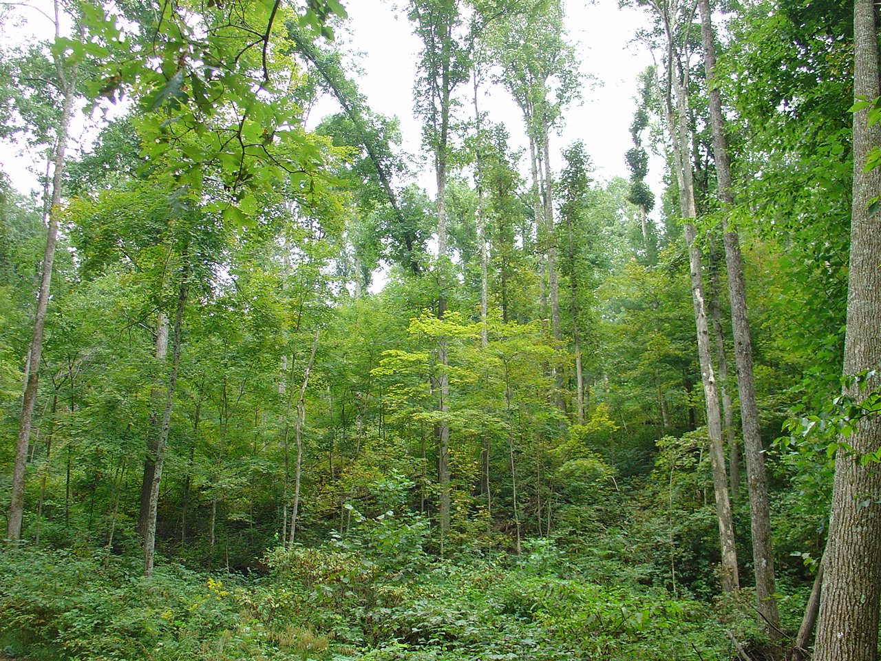 4 236 Acres Of Timberland In West Virginia Timberland Realty