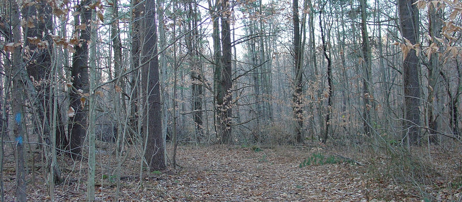 Woods and Trail