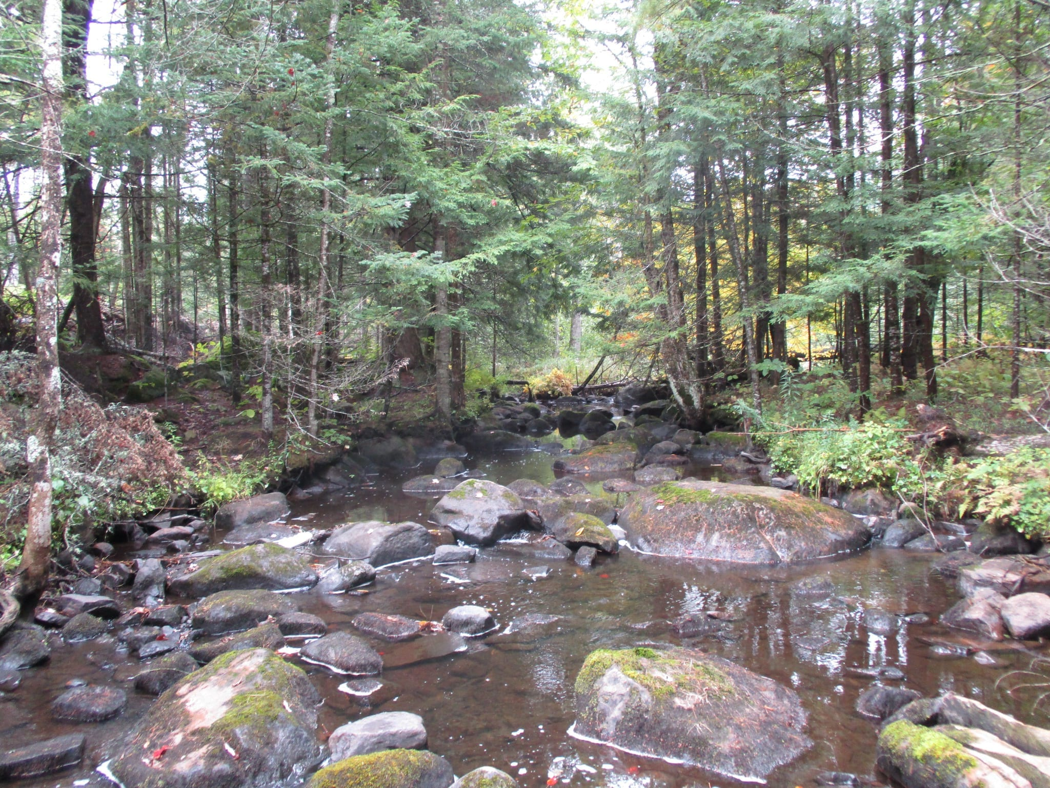 1,583 acres of investment timberlands along the Little