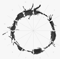 Arrival Alien Language - a circle