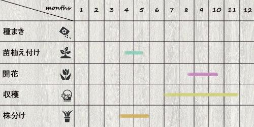 schedule_ginger