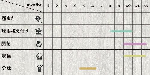 schedule_saffron