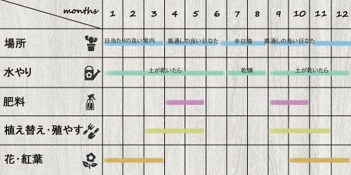 schedule_Aeonium