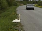 Luik teel, Saaremaal