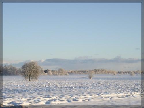 talvehommik