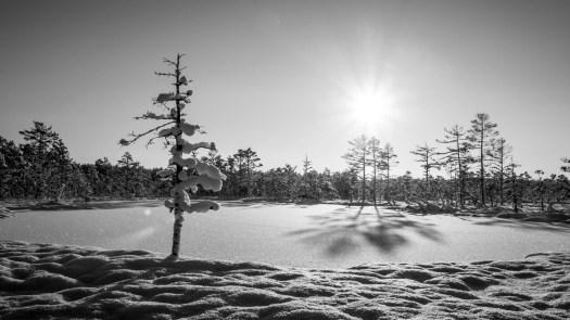 Keskpäev talvises rabas
