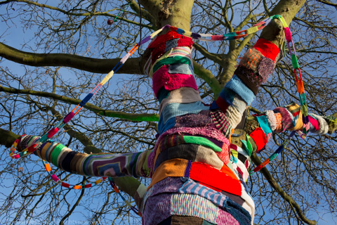 Yarn-bombed tree in Melksham, Wiltshire