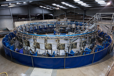 Rotating milking parlour on a dairy in Wiltshire