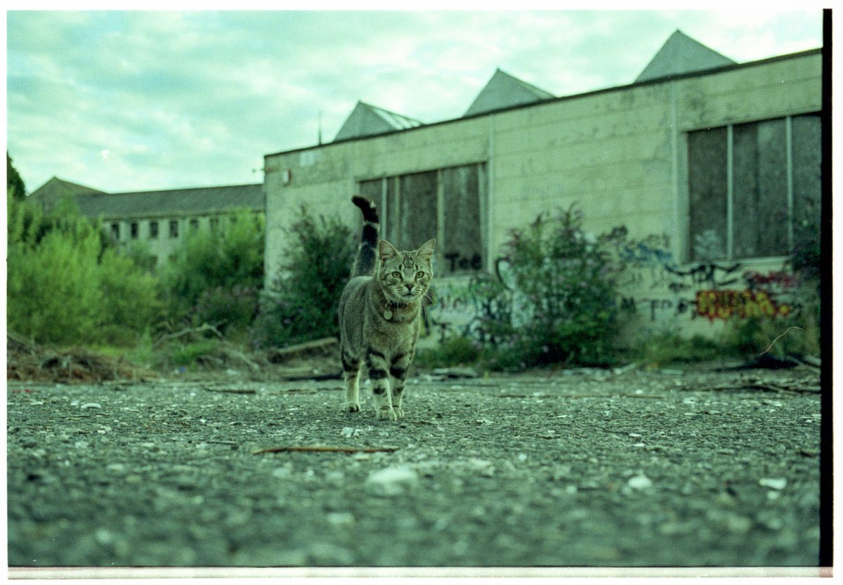 A cat strolls through the disused Saxonvale site towards the camera. A green cast is the result of being out-of-date film.
