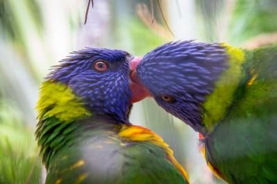 Petits oiseaux colorés