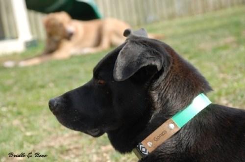 Geopetric dog collar