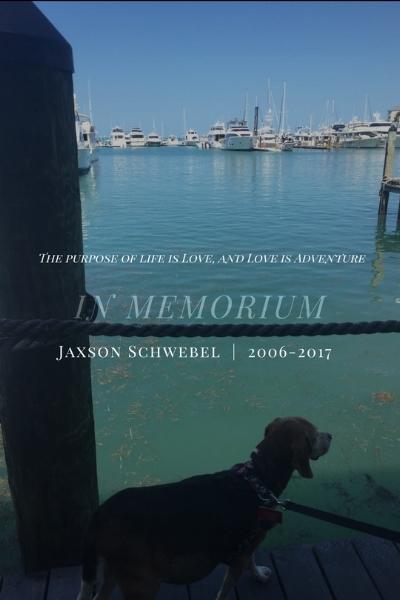 In Memorium, Jaxson the Beagle